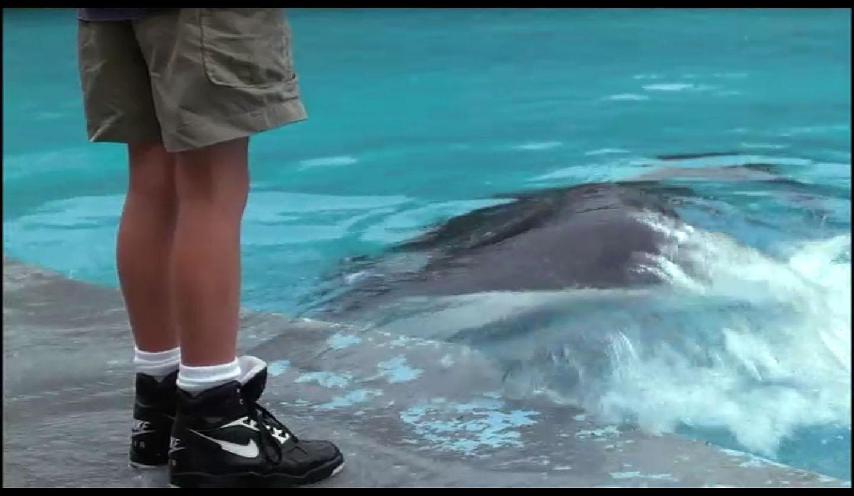 On-Screen Sneaker Sightings: Free Willy